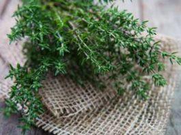 Мощная трава, которая уничтожает стрептококк, герпес, кандидоз и грипп
