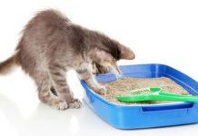 Выбор средства для мытья кошачьего лотка и его правильная дезинфекция