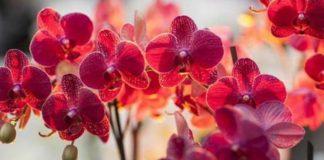 Орхидея-сильный женский талисман! Приметы про орхидею в доме