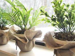 Экологичная подкормка для домашних цветов