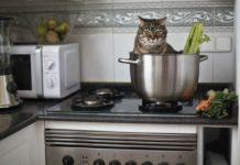 Хозяйке на заметку: что нельзя держать рядом с плитой