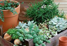 Вопрос: Чем заменить землю для растений в горшках