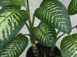 Какие растения не стоит держать у себя в квартире