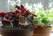 Растения, которые приносят удачу, богатство и счастье