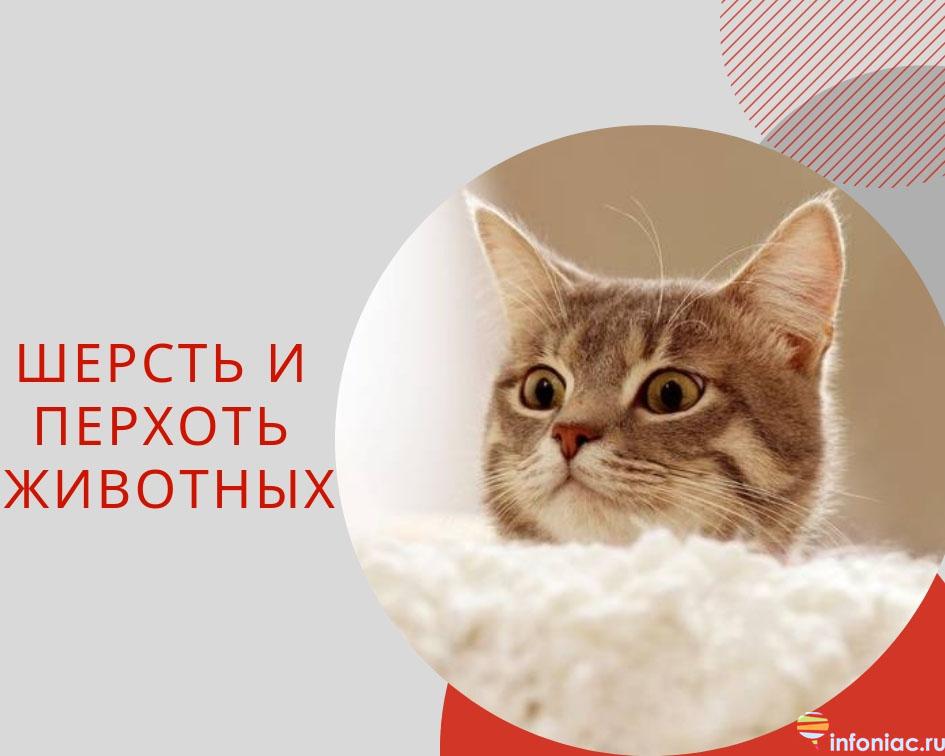 http://www.infoniac.ru/upload/medialibrary/514/514fb4380ed04f1ff8e86ec8325a100c.jpg