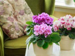 Эти растения преобразят ваш дом