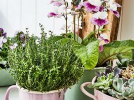 Удобрения для комнатных растений — чем подкормить комнатные цветы