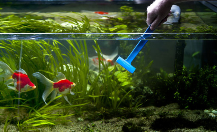 Рыбки будут плавать в чистом аквариуме. /Фото: rybki.guru