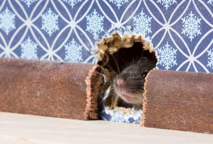 Чтобы мышь не проникла в ваш дом, заделайте дыры металлической губкой / Фото: wpcluster.dctdigital.com