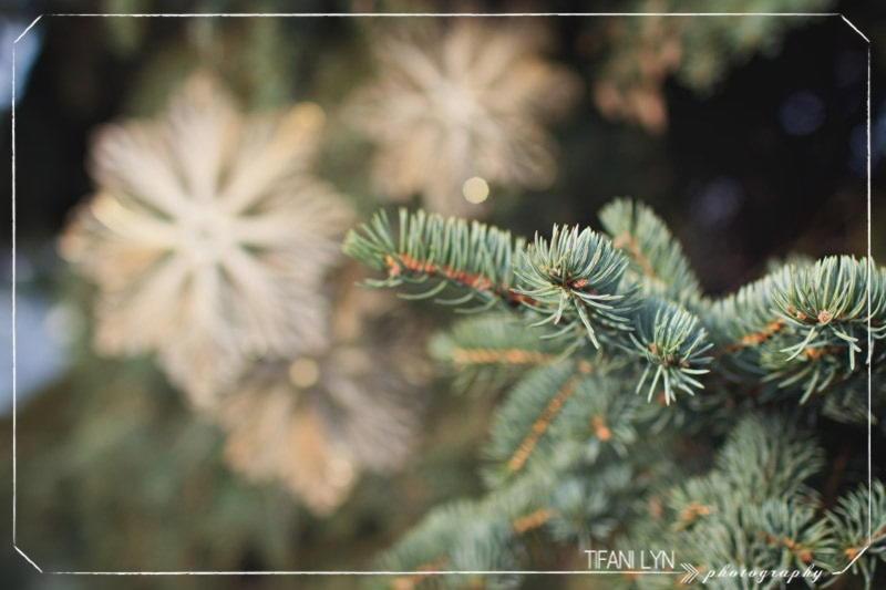 https://prolife.ru.com/wp-content/uploads/2019/12/1513006097-2598-tmas-Snowflake-Tifani-Lyn-21.jpg