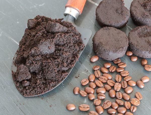 Кофе как удобрение — миф или реально работает?