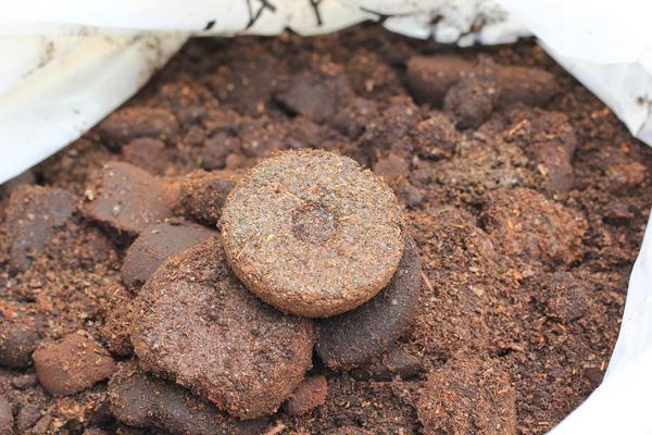 Много остатков от варки кофе? Может, пора заняться вермикультивированием?
