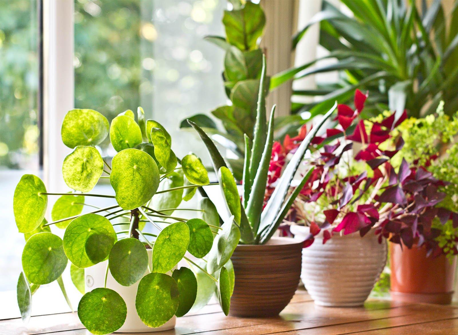 https://ofigeno.ru/wp-content/uploads/2020/06/spring_plants_cover_2048x.jpg