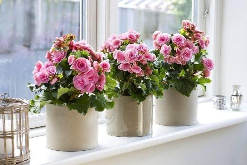 Пересадка комнатных растений: как правильно пересадить, другие полезные мелочи